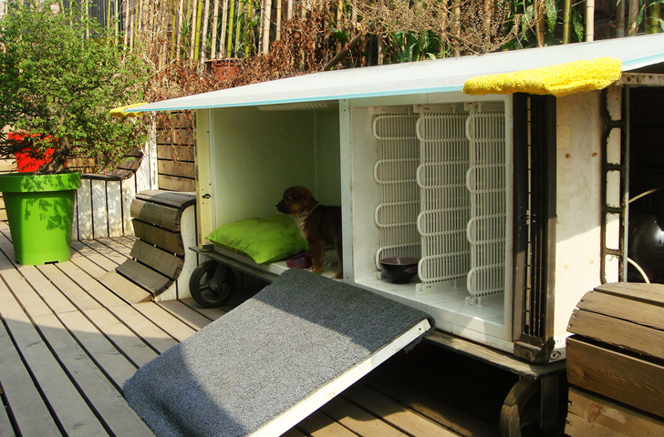 fridge dog shelther coquitlam